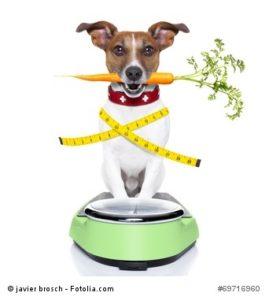 Hundeernährung, Katzenernährung