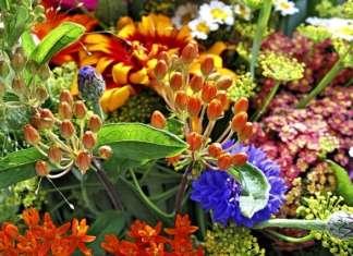 Gartenpflanzen, Giftpflanzen
