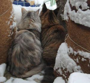 Katzengehege