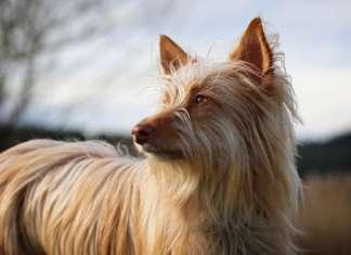 Hundefell_Sommer