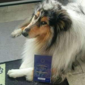 Hund_Impfpass
