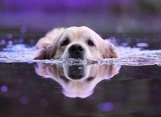 Hunde_unter_wasser