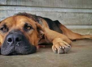depressionen_hund_katze