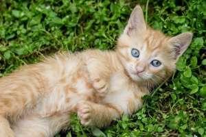 farben der katzen