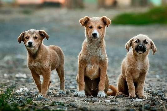 hunde_kastrieren
