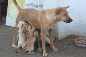 kastration_strassenhunde