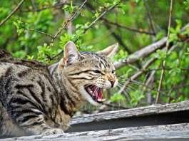 Katze Tierschutz
