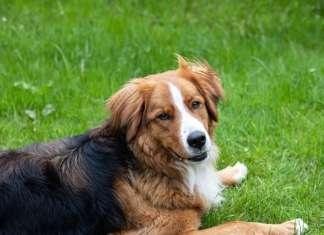 bachblueten_hund