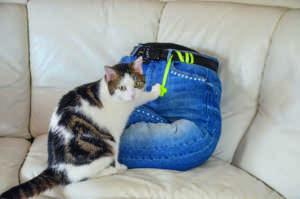 Katzenbett_Jeans