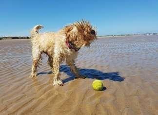 Reisen_mit_Hund