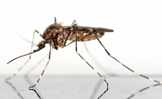 Mückenschutz_Hund