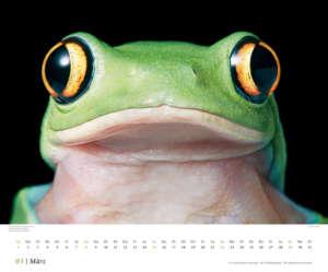 kalender_bedrohte_tiere