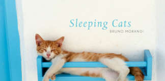 sleeping_cats