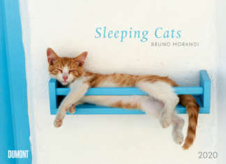 sleeping_cats