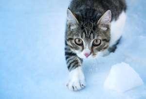 winter_hunde_katze