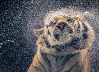 Portraits bedrohter Tiere 2021