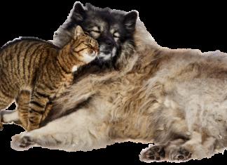 Narkose bei hund und katze