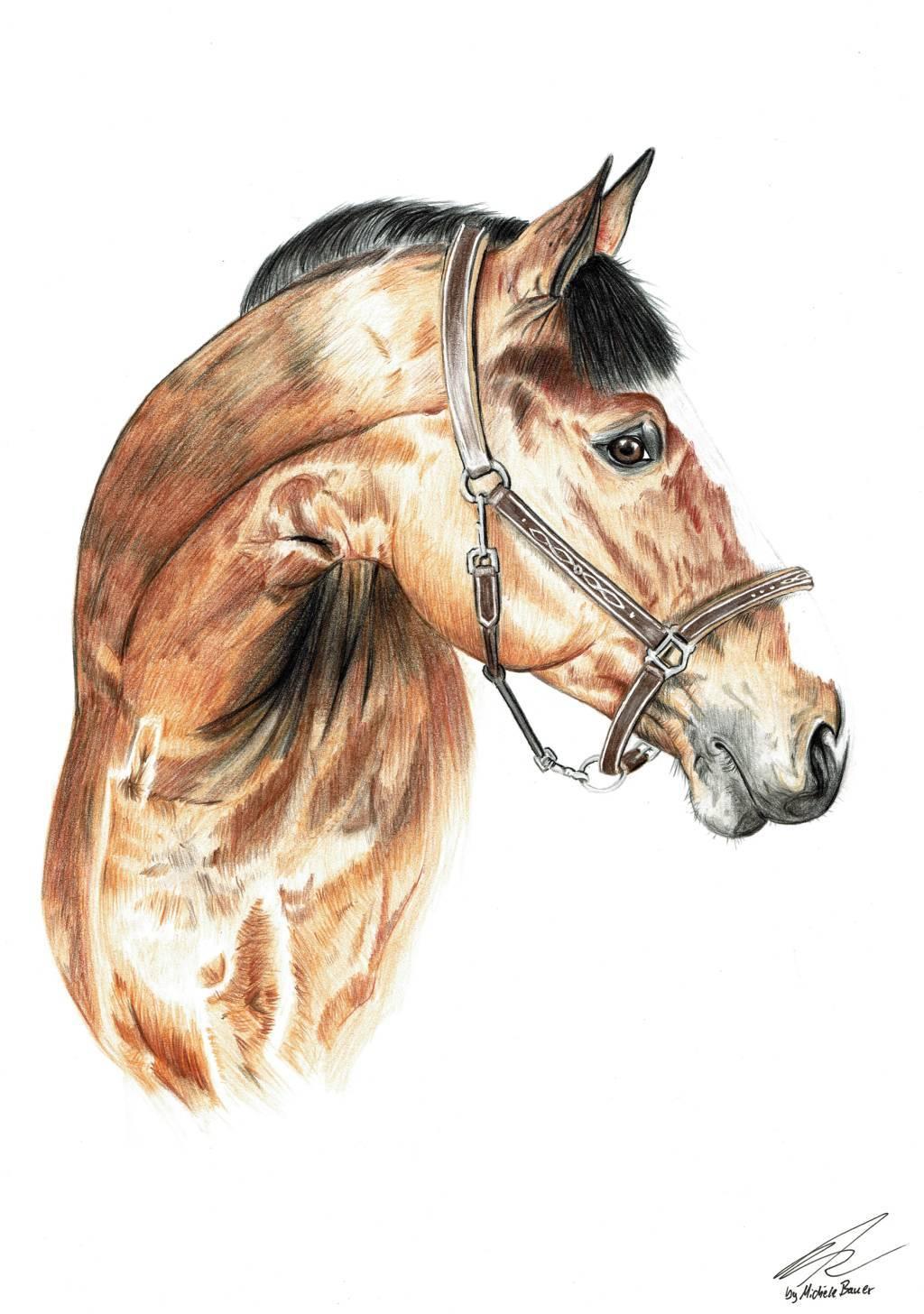 handgemaltes Pferdeportrait