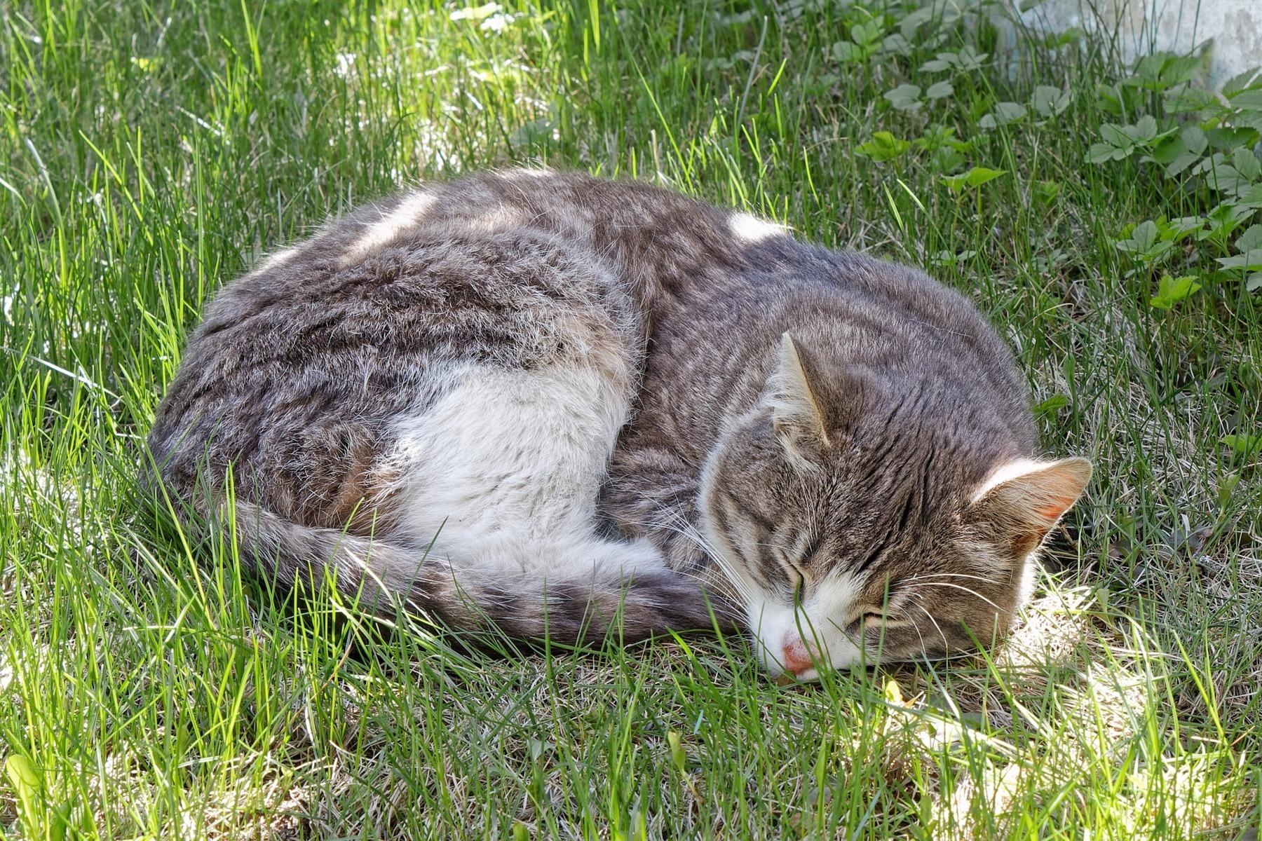 Katze mit Niereninsuffizienz