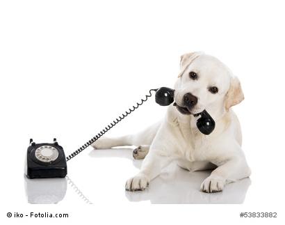 hund mit telefonhoerer